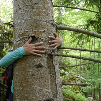 Mini-cure nature à Amélie-les-Bains : sylvo-thérapie